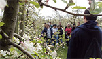 AgriScience students examining fruit trees in blossom